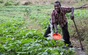 Switzerland supports the national farmers' network MVIWATA