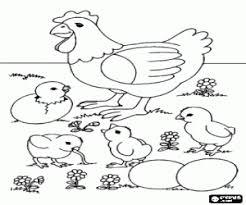 gallina pollitos y huevos para