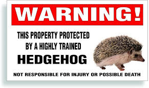 Amazon Com Solar Graphics Usa Warning Decal Property Protected By A Highly Trained Hedgehog Pet Bumper Cage Or Window Sticker 5 75 X 3 25 Inch Automotive