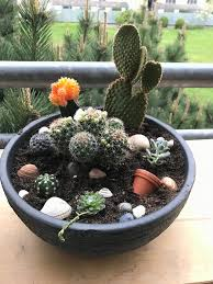 random photo 4 nice cactus gift