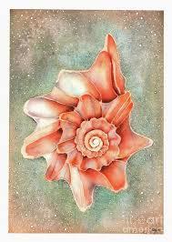 Conch Shell | Conch shell, Conch, Painted shells