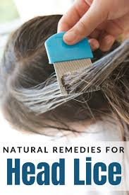 natural remes for head lice the
