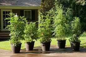 container for your plants bonnie plants