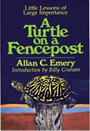 Amazon Com Turtle On A Fence Post 9780698117839 Wood June Rae Books