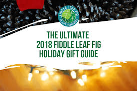 fiddle leaf fig holiday gift guide