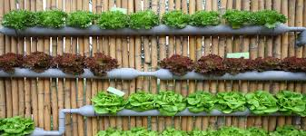 creating a hydroponics garden at home