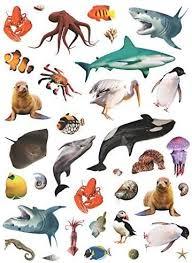 Amazon Com C Photographic Animal Stickers Ocean Animals 35 Stickers 1 1 Toys Games