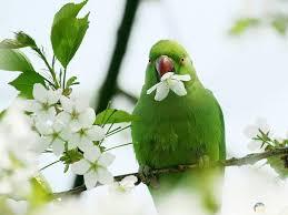 صور طيور Hd خلفيات طيور ملونة روعة
