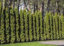 Living Fence 11 Approaches To A Landscape Boundary Bob Vila