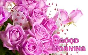 good morning beautiful pink roses