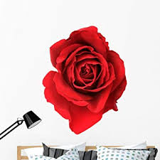 Amazon Com Wallmonkeys Single Blooming Red Rose Wall Decal Peel And Stick Floral Graphic 48 In H X 32 In W Wm89477 Furniture Decor