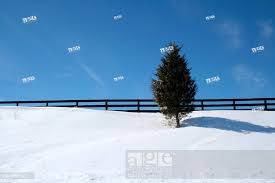 Canada Kingston 09 03 2008 A Lone Tree In Snow By A Black Fence On A Crisp Winter S Day Stock Photo Picture And Rights Managed Image Pic Vig 1856562 Agefotostock