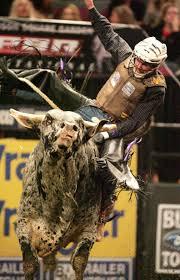 bull riding wallpaper best of pbr