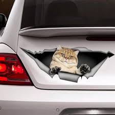 Golden Shaded British Shorthair Cat Decal Cat Car Decal Etsy