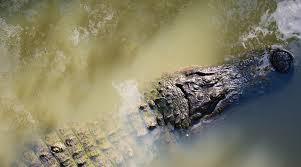 Story How To Be Alligator Safe In South Carolina South Carolina Etv