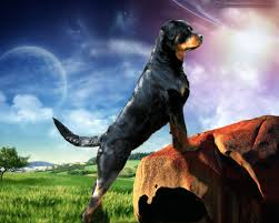 rottweiler dog hd new
