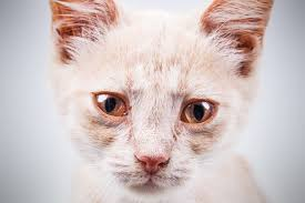 7 reasons why your cats eyes are leaking