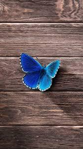 4k Smartphone Wallpapers خلفيات شاشة جوال ايفون Butterfly
