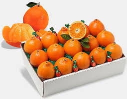 honeybells honeybell oranges florida