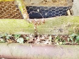 Q Why We No Longer Use Chicken Wire A Raccoon Predators Forum At Permies