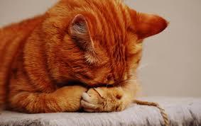 صور حيوانات حزينة