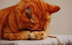 صور حيوانات حزينه