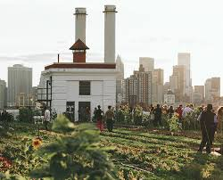 rooftop farm in new york city