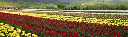 Srinagar Luxury tours, Best Luxury in Srinagar - Yatra.com