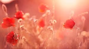 صور ورد روعة خلفيات الزهور باجمل الوان ولقطات بديعة مجلة رجيم