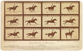 The Horse in Motion | 100 Photographs | The Most Influential Images of All  Time