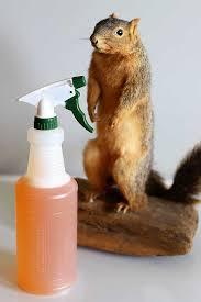 homemade squirrel repellent recipe