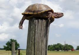 Turtle On A Fence Post Concerning Billy Graham St Pope John Paul Ii Bob Dylan And Journalism Getreligion