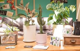 potted plant delivery service perth