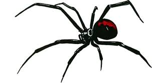 Black Widow Spider 24x12 Back Window Or Body Hot Rod Custom Large Decal Sticker For Sale Online Ebay