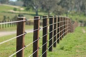 300 Haflinger Horses Ideas Horses Horse Care Haflinger Horse