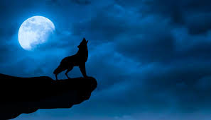 black wolf wallpapers free hd