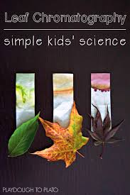 leaf chromatography playdough to plato