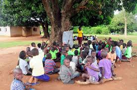 Image result for students studying under a tree in yobe""