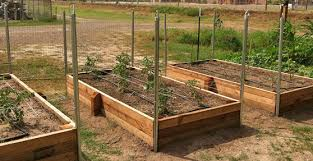how to build a raised garden bed grow