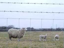 Sheep Fencing And Goat Fencing Is Essential For Safeguarding Animals It Made From High Tensile Heavily Galvanized With Images Sheep Fence Livestock Fence Horses And Dogs