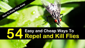 how to keep flies away 54 easy and