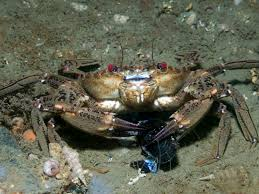 Here's How Crabs Find Food