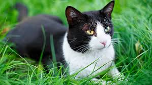 20 Ways To Keep Cats Out Of Your Garden Stuff Co Nz