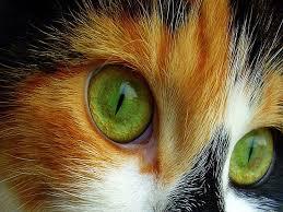 green e kitty lovely cat eyes feline