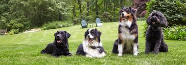 Top 5 Reasons To Choose Dogwatch Hidden Dog Fences