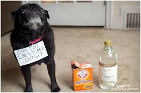 pet sns on carpet home remedy
