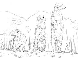 Three Meerkats Drawing Dieren Free