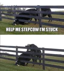 Oh Step Cow What Are You Doing Memes