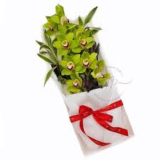 green orchid gift box