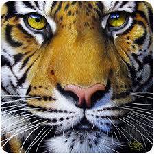 Bengal Tiger Face 3 Pack Of Vinyl Decal Stickers 5 For Laptop Car Walmart Com Walmart Com
